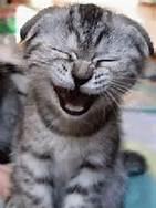 giggling kittie