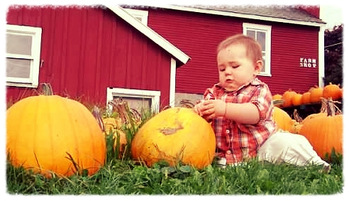 so many pumpkins 1