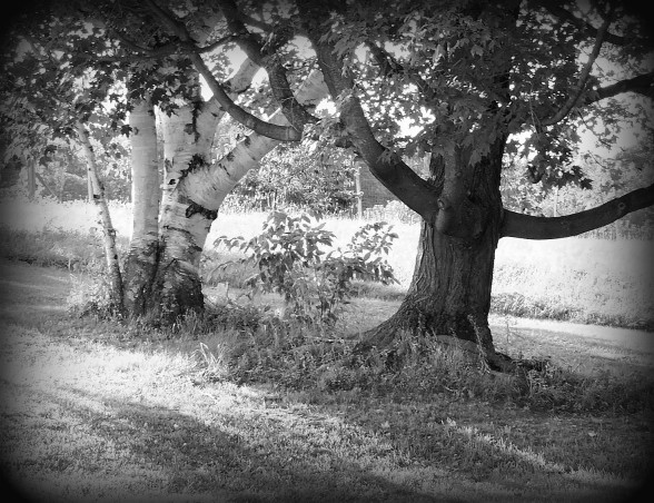 black and white trees 1